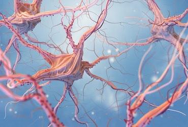 specialization-neurology.jpg